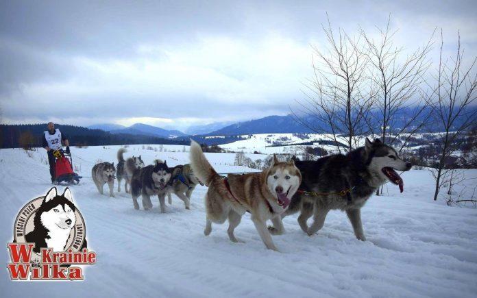 W Krainie Wilka – wyścigi psich zaprzęgów w Bieszczadach