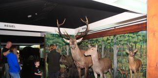 Weekend majowy w Muzeum Przyrodniczym w Ustrzykach Dolnych