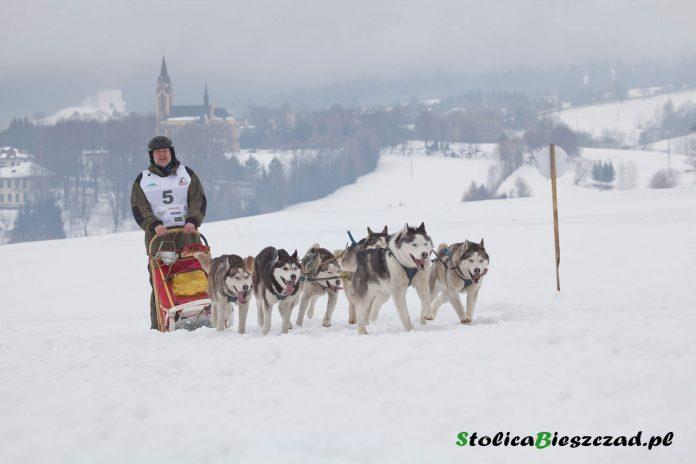 W Krainie Wilka - wyścigi psich zaprzęgów w Lutowiskach